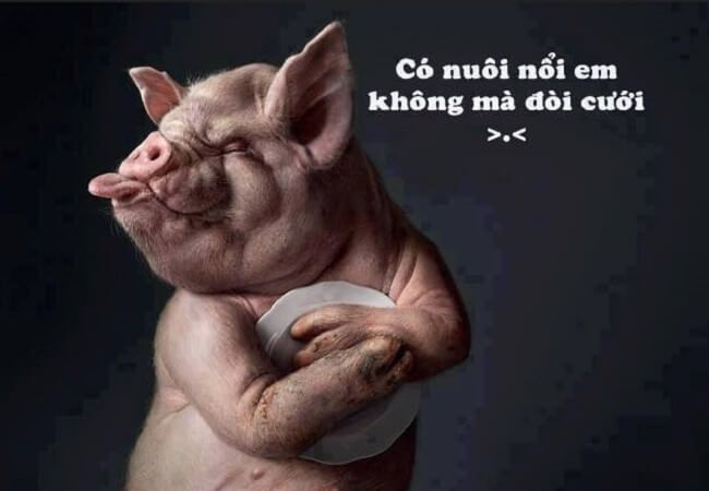 hinh anh hai huoc ve cuoc song 9